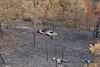 velay (2) (Lyon2024) Tags: lyon2024 velay auvergnerhônealpes hauteloire saintpaldemons terrières incendie renaultdauphine europe france pourrex rurex ruralexploration