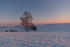 Winter Landscape (Mirek Pruchnicki) Tags: winter snow landscape orły województwopodkarpackie polska tree colors sunset evening softlight sky fields