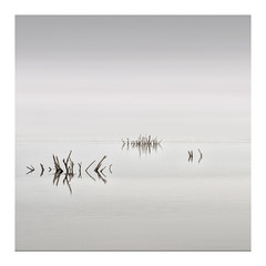 No Wind, No Waves (richieJ 11) Tags: porlock somerset longexposure minimal sticks trees shadows coast muted