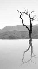 branches. (maotaola) Tags: hierveelagua oaxaca loneliness solitude branches minimal minimalismo monochrome winter reflejo reflection lessismore alone minimalismoenblancoynegro simplicity