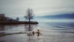 * (PattyK.) Tags: ioannina giannena giannina epirus ipiros balkans hellas ellada greece grecia griechenland whereilive lake lakeside lakefront swans lakepamvotida ioanninalake pamvotida winter february 2016 mavilisquare winterlandscape lovelycity amateurphotographer ιωάννινα γιάννενα ηπόλημου όμορφηπόλη ηπειροσ βαλκάνια ελλάδα ευρώπη λίμνη λίμνηιωαννίνων παμβώτιδα χειμώνασ κύκνοι παραλίμνιο μώλοσ πλατείαμαβίλη φεβρουάριοσ europe europeanunion snapseed