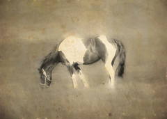pinto in sepia (Hal Halli....happy everything!!) Tags: horse pony pinto farm beauty wallart