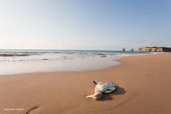 (macarena merino) Tags: mar francia gaviota gemelas hendaye marea hendaia aquitania