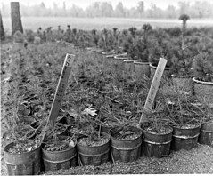 Charles A. Sprague Tree Seed Orchard Dedication (BLMOregon) Tags: blackandwhite tree film oregon vintage forestry seed orchard historic blm doi