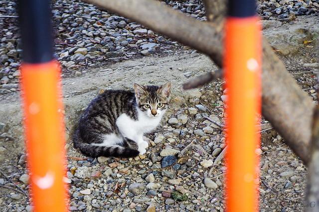 Today's Cat@2015-0713