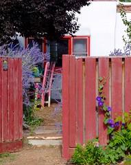 Charming (suenosdeuomi) Tags: pink red newmexico santafe window fence gate purple vine bloom hood charming morningglory entry pinkchair redgate redwindow panasoniclumixdmcfz35