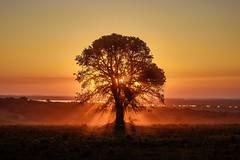Tree of Life     La Jaula Sunset