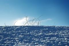 Neige snow La Ferte Bernard toit - atana studio (Anthony SJOURN) Tags: neige snow la ferte bernard toit atana studio anthony sjourn