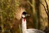 CRANE (pearl.winch) Tags: 20thdecember2016 colchesterzoo 5942 crane