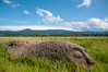 Relic (Oliver J Davis Photography (ollygringo)) Tags: buffalo megalith ancient stone rock carving history rice field bada valley sulawesi lore lindu tentena southeastasia travel nikon d90 nationalpark green sky blue cloudy indonesia