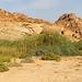 DSC07631 - NAMIBIA 2013