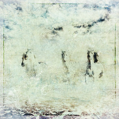 Bernie Tuffs - Out of the Mist (Bernie Tuffs - Digital Artist) Tags: awake horses beach sky sea whitehorses