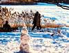 le bonhomme de neige...sale ;-) (photosgabrielle) Tags: photosgabrielle hiver winter neige montreal snow city urban bonhommeneige people snowman
