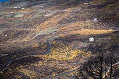 Riqueza de colorido (meyla555) Tags: islascanarias canarias canaryislands kanarischeinseln kanaren landscape landschaft paisaje lapalma lapalmaislascanariaskanarenkanarischeinselncumbre colores farben farbenpracht