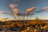 Saguaro National Park (fred h) Tags: sagauro122920165823 saguaronationalpark fred holley fredholley
