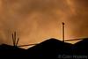 The Raven of the Apocalypse (DurhamOwl) Tags: bird city evening raven scaffold scaffolding sky skyline urban