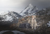 Summit dogs on Freedom Peak (johnwporter) Tags: hiking scramble cascades mountains nationalforest okanoganwenatcheenationalforest wilderness alpinelakeswilderness freedompeak pnw upperleftusa northwestisbest 徒步 爬行 喀斯喀特山脈 山 國家森林 奧卡諾根韋納奇國家森林 荒野 高山湖泊荒野區 自由峯 太平洋西北部 美國左上角 西北部最好 teanaway teanawaybackcountry staffordcreek staffordcreekbasin 提安那威 提安那威邊遠地區 斯塔福德溪 斯塔福德溪盆地 labrador blacklab yellowlab 拉布拉多 黑拉不拉多 黃拉不拉多 primelens depthoffield canon50mm canon50mm18 定焦鏡頭 景深