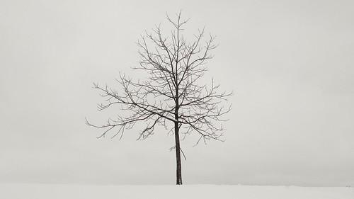 White Tree. #lgg4