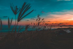 Tumbleweeds at Sunset (masemase) Tags: wedding cabo san lucas fall marriage mexico october vacation ocean beach water sky clouds beautiful gradient landscape landscapes