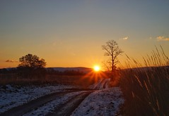 8/365 - Pation (explored #90) (puckish) Tags: sunrise blandy statearboretumofvirginia flare 365the2017edition 3652017 day8365 8jan17 snow field meadow