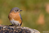 sweet little bluebird (Zoo Much Information) Tags: hh85 bird bluebird bokeh czyn7fo maryland md winter one profile beak cute chubby 2017 nature green garden