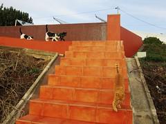 IMG_6249 (Chat Malicieux) Tags: cat chat katze flämmli chico joana garfield
