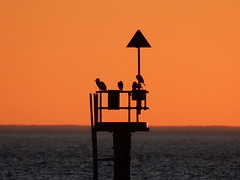 Sunset - Grandstand View (mikecogh) Tags: glenelg sunset channelmarker birds triangle silhouette