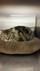 Kelsey - 5 year old spayed female