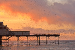 Murmuration of Starlings over Aberystwyth Pier (Steve Moore-Vale) Tags: aberystwyth wales pier sunset starlings starling sturnus vulgaris murmuration 5d3 5diii