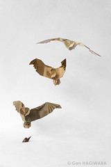 獲物を狩るフクロウ / Owl in hunt (Gen Hagiwara) Tags: origami paper folding genhagiwara bird owl rat prey hunt wildlife art craft diorama