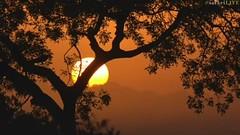 Misty sunrise  Djuma Private Game Reserve,South Africa [screenshot] (Dreaming of the Sea) Tags: djuma sky sunrise trees dawn mist fog southafrica sun summer nationalgeographic krugernationalpark kruger
