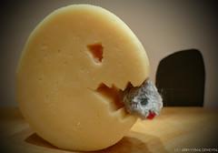 Say Cheese! (kalbasz) Tags: macromondays saycheese cheese fun