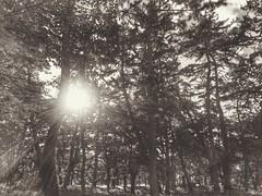5h en juin 03 (Stphane Barbery) Tags: soleil kyoto palais arbre japon gosho imprial