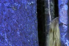 J0411063031 (nfoto2002) Tags: norway mari skog abstrakt bltime stammer hulder
