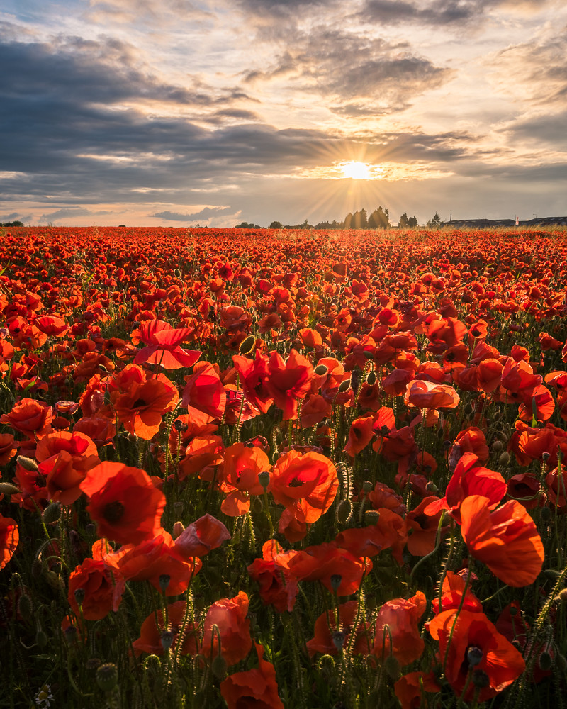 Sea of Poppies and Colonialism Essay