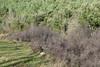 P1630866 (Xavier Béjar) Tags: quercus plantae garrotxa holmoak encina prunusspinosa quercusilex crataegusmonogyna azinheira fagaceae magnoliophyta magnoliopsida alzina fagales altagarrotxa hollyoak salesdellierca tracheophyta taxonomy:class=magnoliopsida taxonomy:order=fagales taxonomy:family=fagaceae taxonomy:kingdom=plantae taxonomy:genus=quercus taxonomy:binomial=quercusilex taxonomy:common=holmoak taxonomy:phylum=magnoliophyta monteia taxonomy:species=ilex taxonomy:common=encina taxonomy:common=alzina taxonomy:common=hollyoak taxonomy:superphylum=tracheophyta taxonomy:common=azinheira