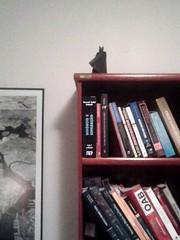 Batman! (orig4mi.) Tags: paper origami batman fold