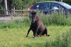 """""""Ooh I need an Horsteopath these days"""". (Wildlife Terry) Tags: equine humour wheelockrailtrail hindheathroad sandbach horse osteopath field meadow pasture pastoral countryside rural"""