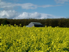 "Levin Winery from our Rapeseed Field • <a style=""font-size:0.8em;"" href=""http://www.flickr.com/photos/133405556@N08/20071069032/"" target=""_blank"">View on Flickr</a>"