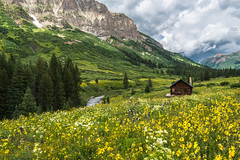 Cabin In Paradise (Robin-Wilson) Tags: snow storm mountains daisies cabin bravo gothic eastriver wildflowers crestedbutte larkspur nikond800