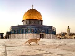 (ourlime) Tags: cat mosque masjid israkmikraj alaqsa iphonese