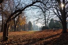Manovra alla Houdini (Roberto -) Tags: autumn leaves autunno foglie colors colours light tree garden torino mole turin