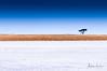 Makgadikgadi Saltpan - The Edge (Alec Lux) Tags: botswana makgadikgadi beginning blue border crust dry edge empty end landscape lonely nature pan salt saltpan salty savannah sky