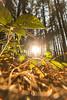 Wood Of Light (Daniele Pauletto) Tags: woods bosco trees pines nature light sun sunset dpphotography
