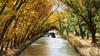 Entre verde y amarillo (Ana_Lobo) Tags: canaldecastilla valladolid otoño canal agua barco turístico embarcación antoniodeulloa medina rioseco castillayleón canoneos 100d color otoñal árboles