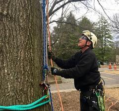 Arborist looks up (Montgomery Parks, MNCPPC) Tags: treeclimbing woodsidepark january2017 2017