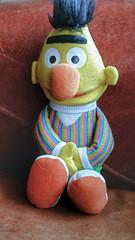 Bert (ManOfYorkshire) Tags: sesamestreet bert muppets muppet toy plush filled small character yesidomind 6 w pigeons