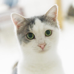 ^}{^ (dagomir.oniwenko1) Tags: shelter gostomel style gatito kotek cat cats animals ukraine ua canon canoneos7d sigmadc1750 color portrait platinumheartaward