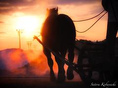 moment (MakiEni777) Tags: horse animal sun morning image