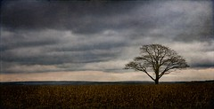 Solitude (Nancy Rose) Tags: 7764 textures illustrative storytelling solitude alone strong weathered weather nightfall